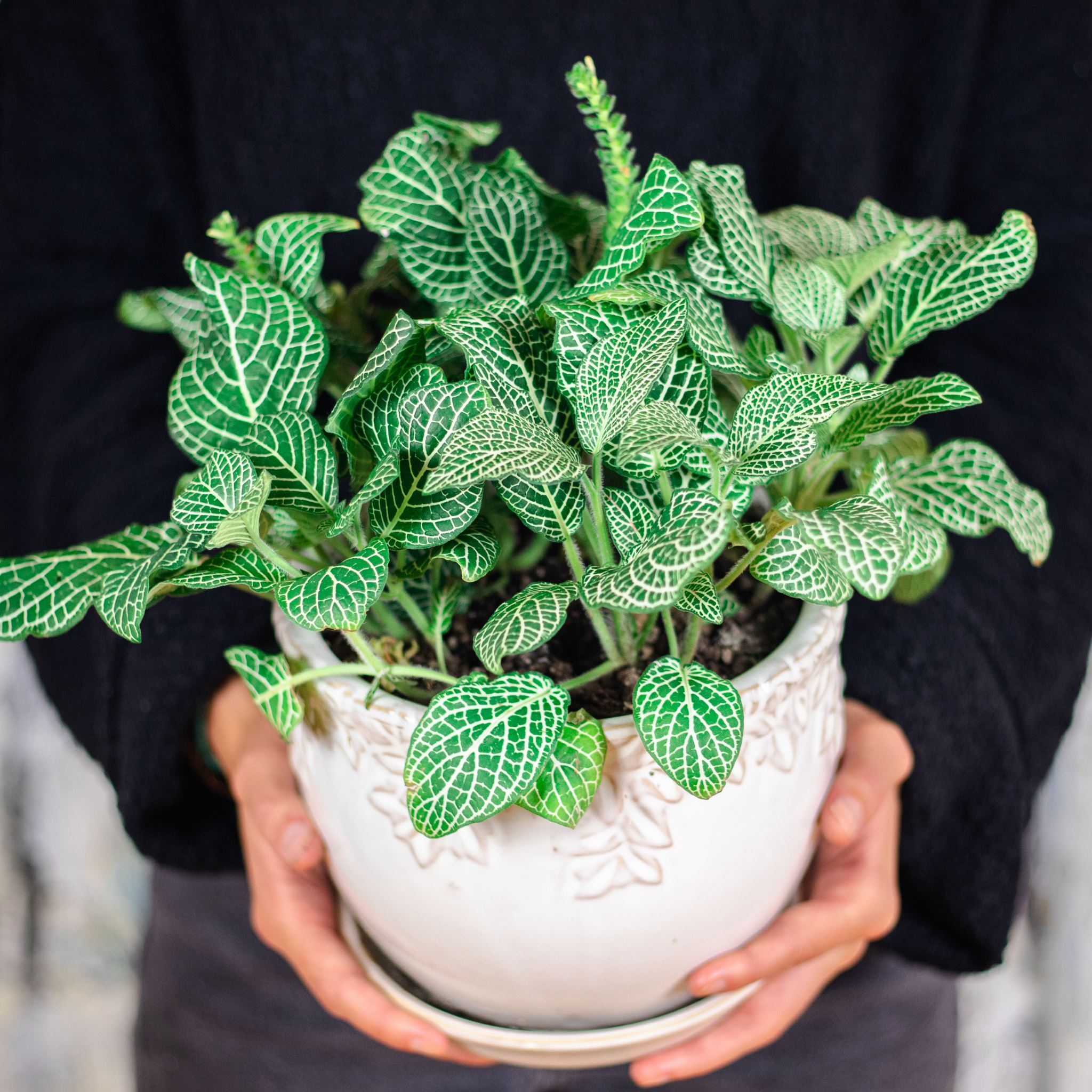 ten plants to turn your home into-a tropical paradise